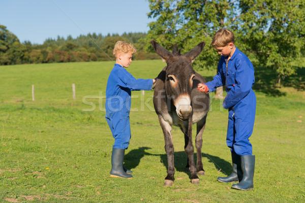Jongen kerrie ezel boerderij natuur landschap Stockfoto © ivonnewierink