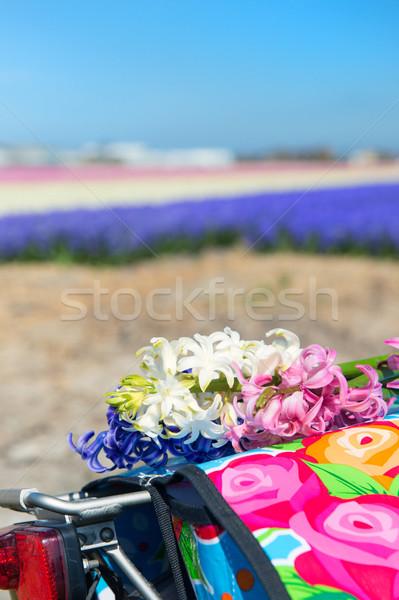 Holandés paisaje moto flor colorido típico Foto stock © ivonnewierink