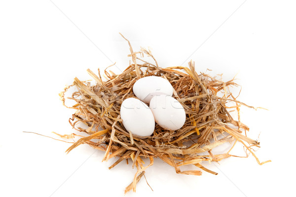 Bird nest Stock photo © ivonnewierink