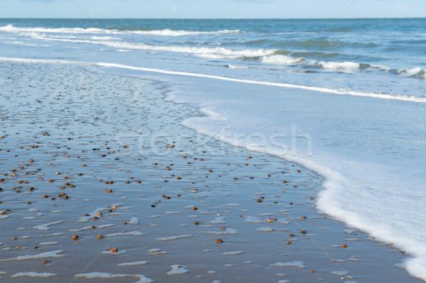 Sea with shells Stock photo © ivonnewierink
