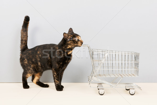 Tortoiseshell cat with shopping cart Stock photo © ivonnewierink