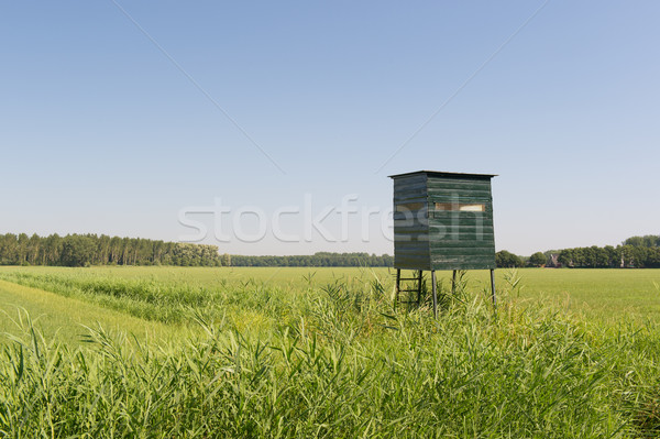 Observation hut for wild Stock photo © ivonnewierink