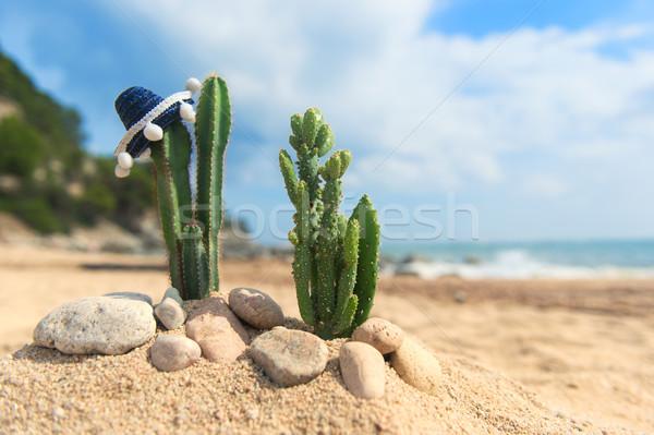Cacto plantas sombrero praia espanhol água Foto stock © ivonnewierink