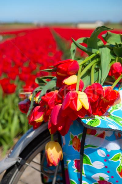 オランダ語 風景 自転車 花 カラフル 典型的な ストックフォト © ivonnewierink