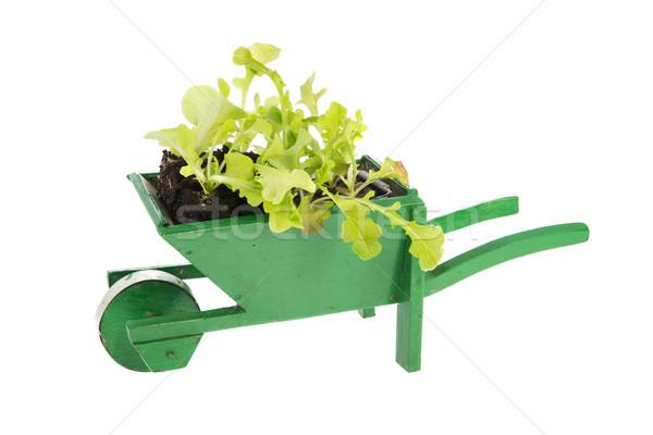 Wheelbarrow with vegetable plants Stock photo © ivonnewierink