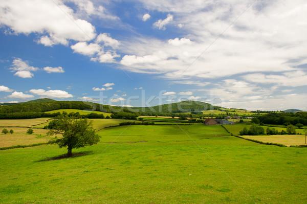 Wide landscape in French Bourgogne Stock photo © ivonnewierink