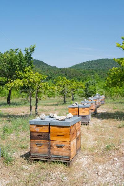 Arı çok açık doğa manzara Stok fotoğraf © ivonnewierink
