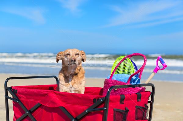 Funny dog on vacation Stock photo © ivonnewierink