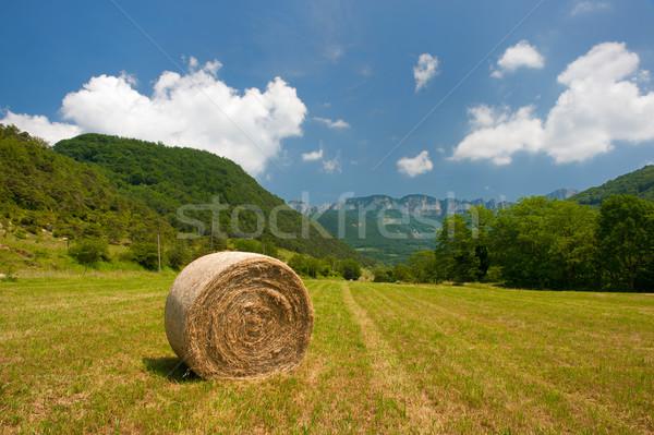 соломы французский пейзаж продовольствие солнце природы Сток-фото © ivonnewierink