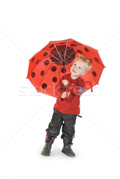 雨の 日 少年 傘 子 ストックフォト © ivonnewierink