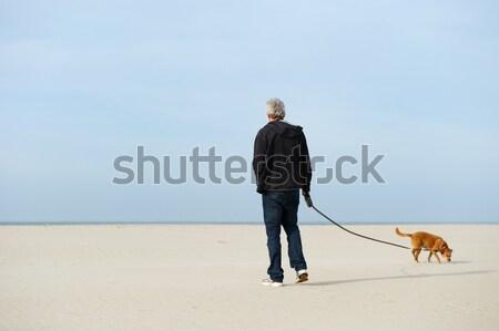 服従 訓練 茶色の犬 髪 青 ストックフォト © ivonnewierink