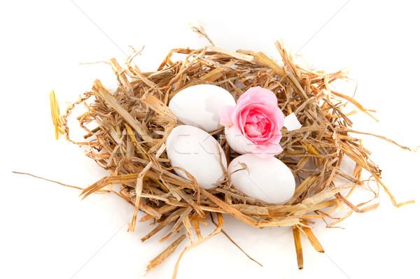 鳥の巣 わら 白 卵 孤立した 鳥 ストックフォト © ivonnewierink