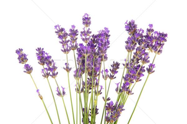 Bukiet lawendy fioletowy kwiaty biały tle Zdjęcia stock © ivonnewierink