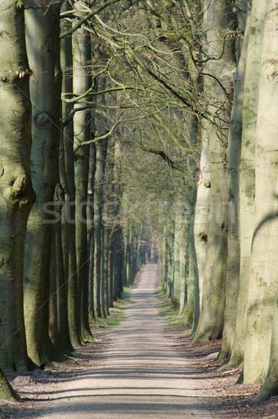 Long lane in forest Stock photo © ivonnewierink
