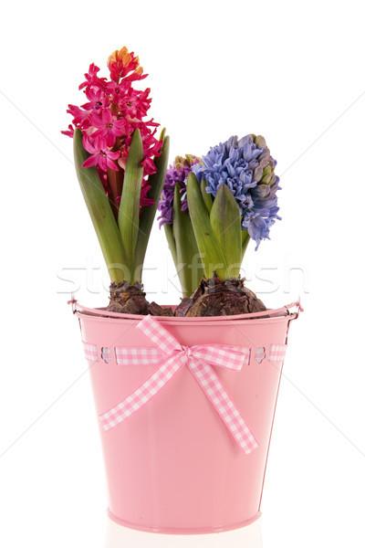 Colorful Hyacinths Stock photo © ivonnewierink