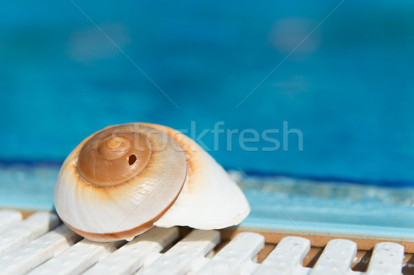 Shell at swimming pool Stock photo © ivonnewierink