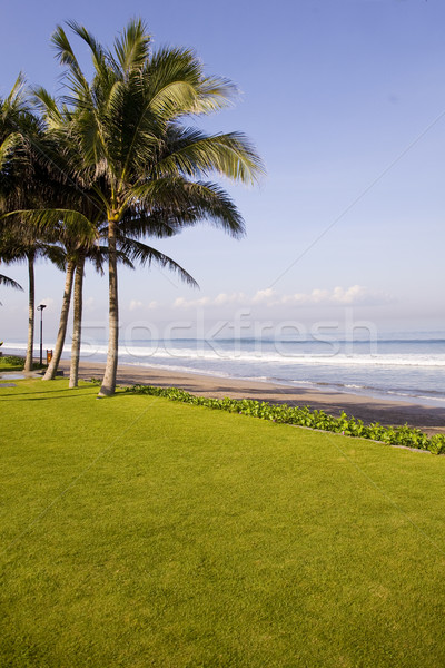 Tropical beach Stock photo © ivonnewierink