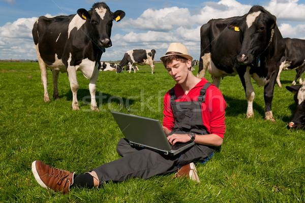 Stok fotoğraf: Genç · çiftçi · dizüstü · bilgisayar · alan · inekler · çalışma