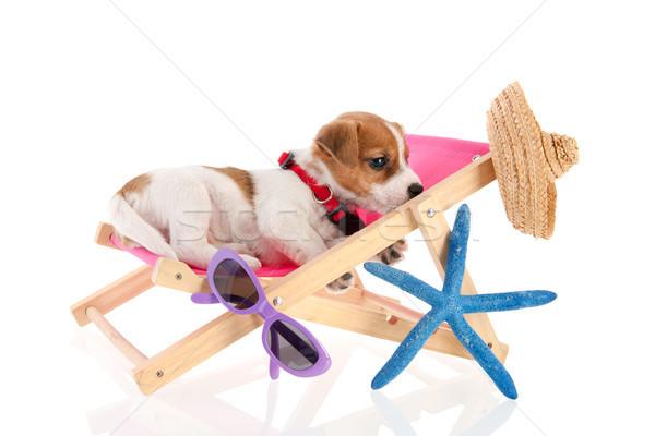 Stockfoto: Strand · puppy · weinig · cute · stoel