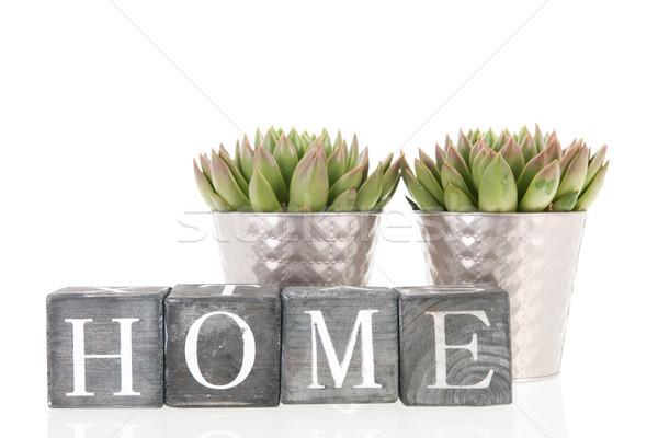 Etli bitkiler pot ev gümüş iç Stok fotoğraf © ivonnewierink