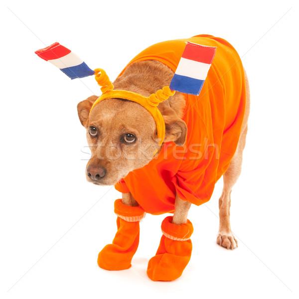 Holandês futebol cão laranja bandeiras Foto stock © ivonnewierink