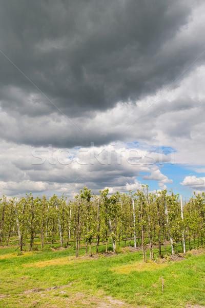 Gyümölcsfa faiskola kert gyümölcs fák felhők Stock fotó © ivonnewierink