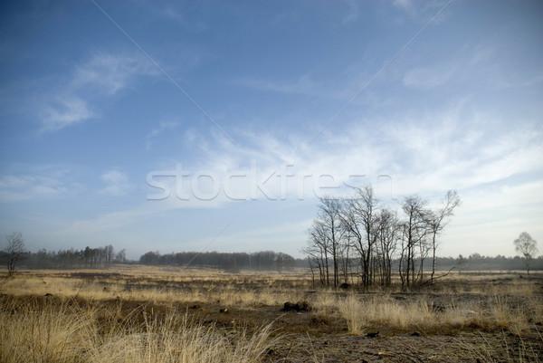 Landscape in springtime Stock photo © ivonnewierink