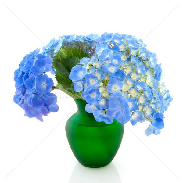 Garden flowers Hydrangea Stock photo © ivonnewierink