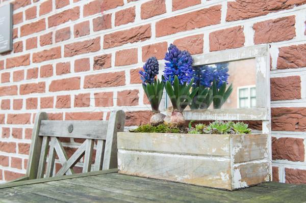 Flores roxo ao ar livre primavera Foto stock © ivonnewierink
