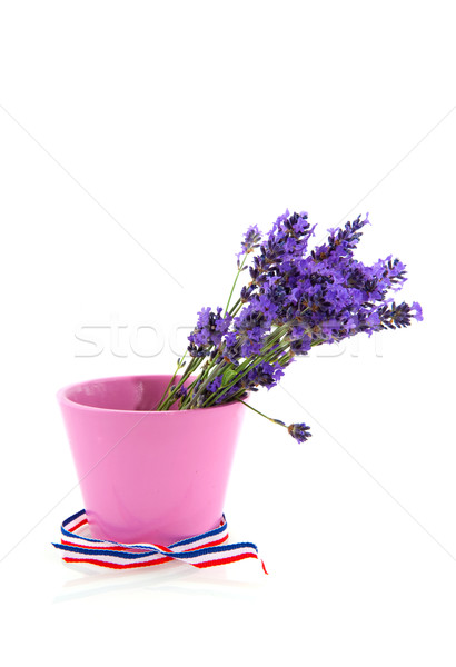 Stock photo: Bouquet Lavender in pink flower pot