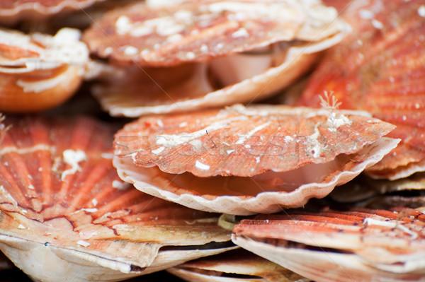Speciaal lekkernij Frankrijk schelpen voedsel Stockfoto © ivonnewierink