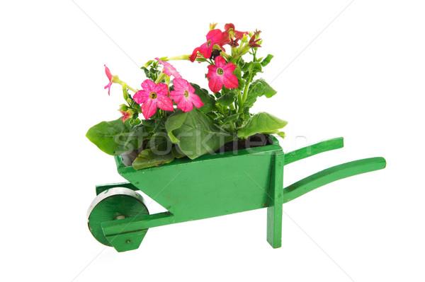 Brouette jardin plantes vert bois isolé Photo stock © ivonnewierink