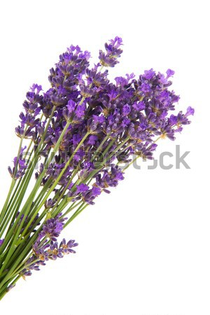 Stock photo: Bouquet Lavender