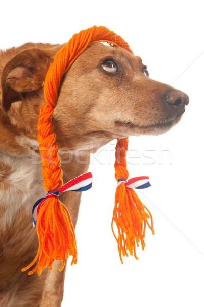 Funny Dutch dog looking op Stock photo © ivonnewierink