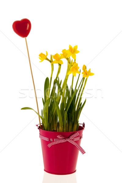 Narcissen roze emmer Rood hart Geel Stockfoto © ivonnewierink