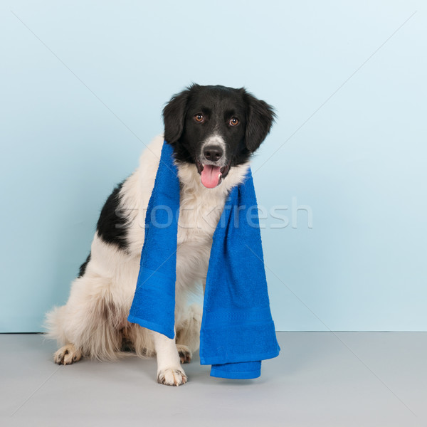 Dog ready for the health club Stock photo © ivonnewierink