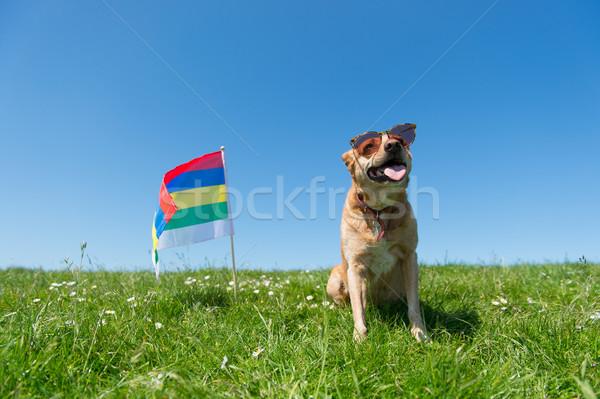 Hond vergadering gras nederlands eiland bruin Stockfoto © ivonnewierink