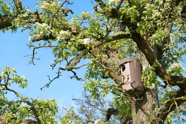 Bird house in tree Stock photo © ivonnewierink