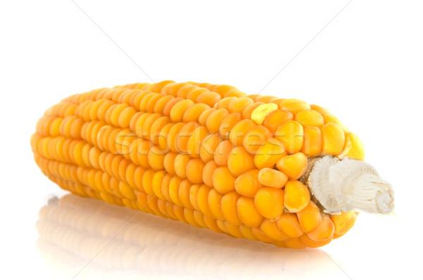 corncob Stock photo © ivonnewierink