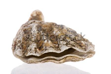 открытых устрица морем изолированный белый продовольствие Сток-фото © ivonnewierink