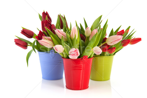 Stock photo: Colorful tulips in buckets