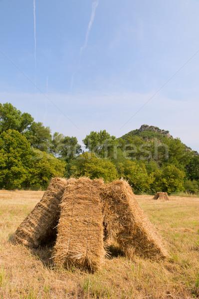 Blocks with hay in the fields Stock photo © ivonnewierink