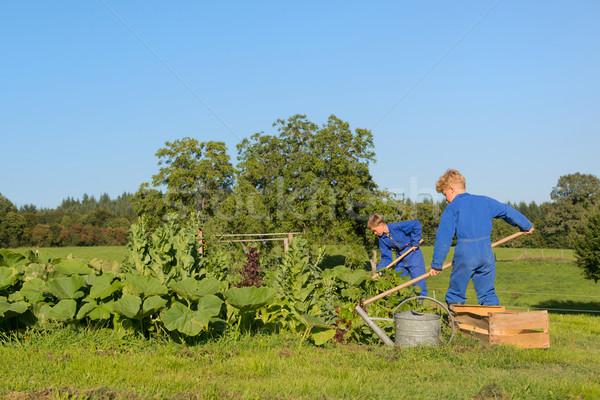 фермы мальчики помогают растительное саду рабочих Сток-фото © ivonnewierink