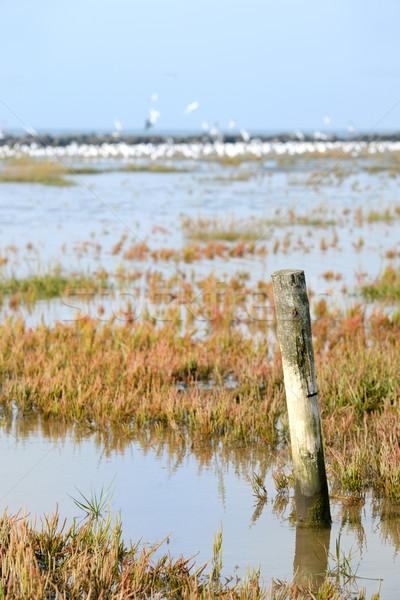 Low tide at the wadden island Stock photo © ivonnewierink