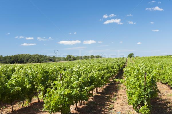 виноградник пейзаж зеленый лет Франция деревья Сток-фото © ivonnewierink