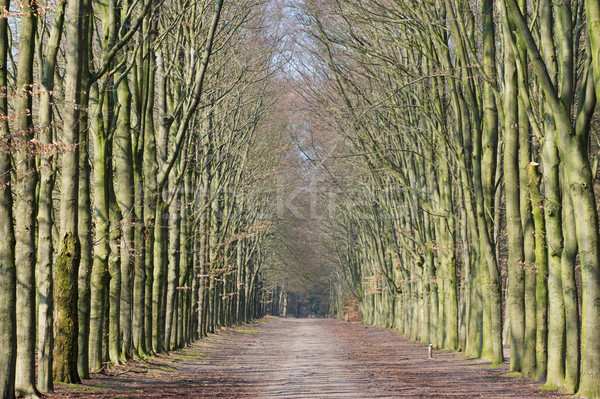 Stock photo: Long lane in forest
