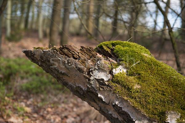 Yosun orman ağaç ahşap doğa Stok fotoğraf © ivonnewierink