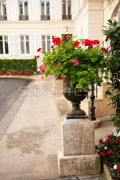 Flower pot with Pelargonium Stock photo © ivonnewierink