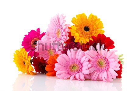 Bouquet colorful Gerber flowers Stock photo © ivonnewierink