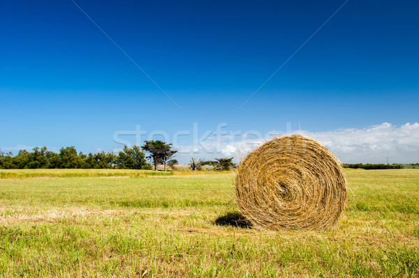 Bale hay in agriculture landscape Stock photo © ivonnewierink